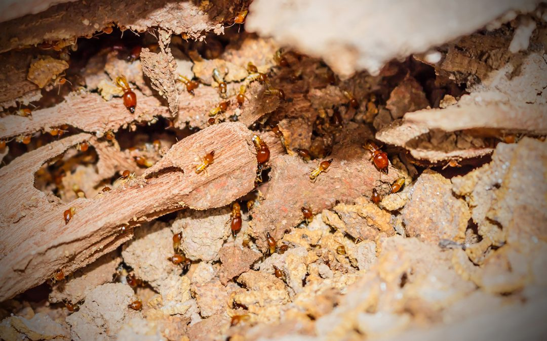 5 Signs of a Termite Infestation