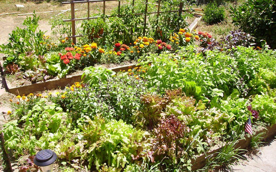 help your garden survive summer