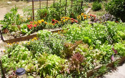4 Ways to Help Your Garden Survive Summer